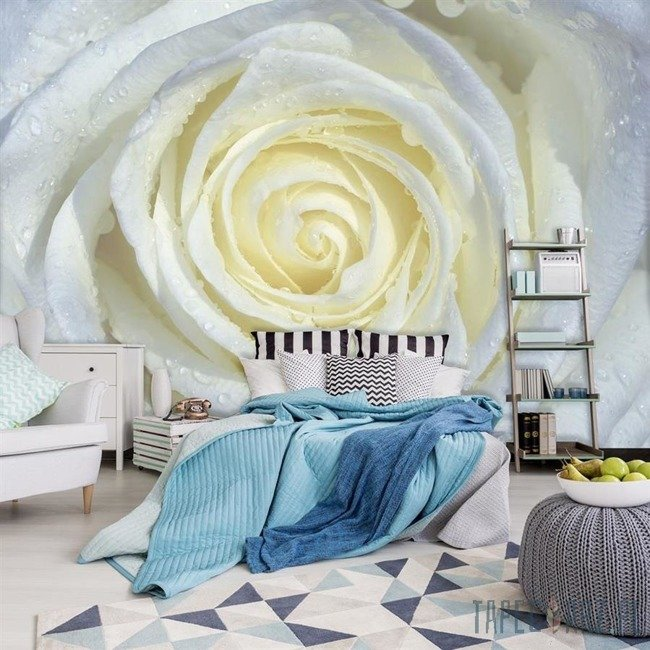 Fototapeta Biała róża z rosą 663