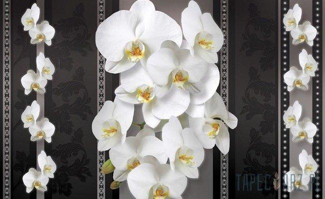 Fototapeta Białe storczyki na kwiecistym wzorze 1292