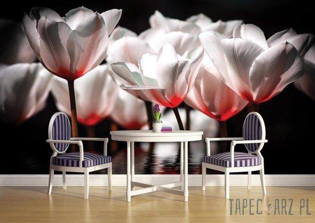 Fototapeta Biało-czerwone tulipany 1102