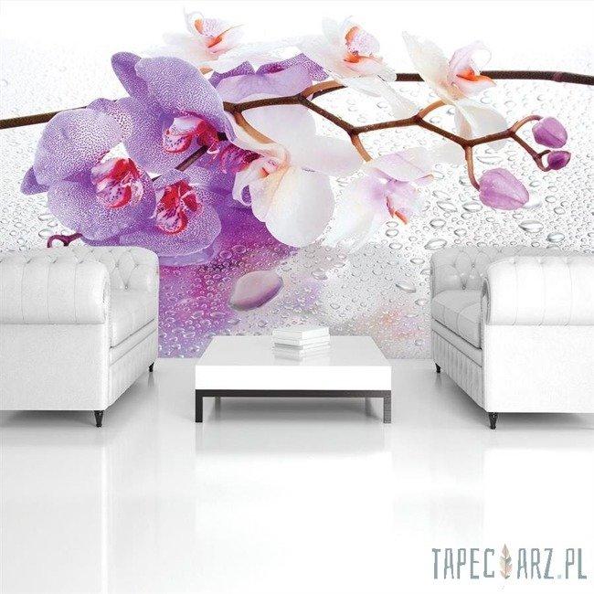 Fototapeta Fioletowa orchidea 869