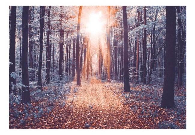 Fototapeta - Krawędź słońca