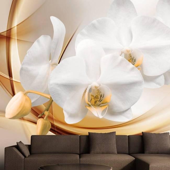 Fototapeta - Kwiat orchidei