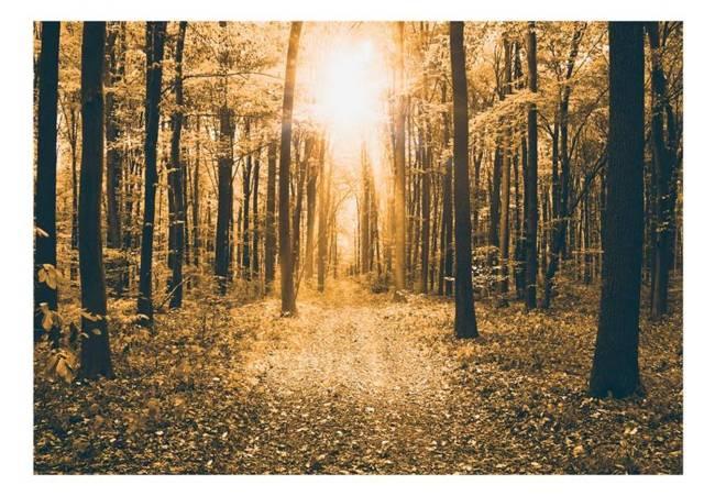 Fototapeta - Magiczne światło