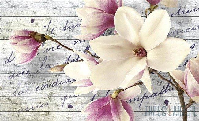 Fototapeta Magnolia na deskach 2878