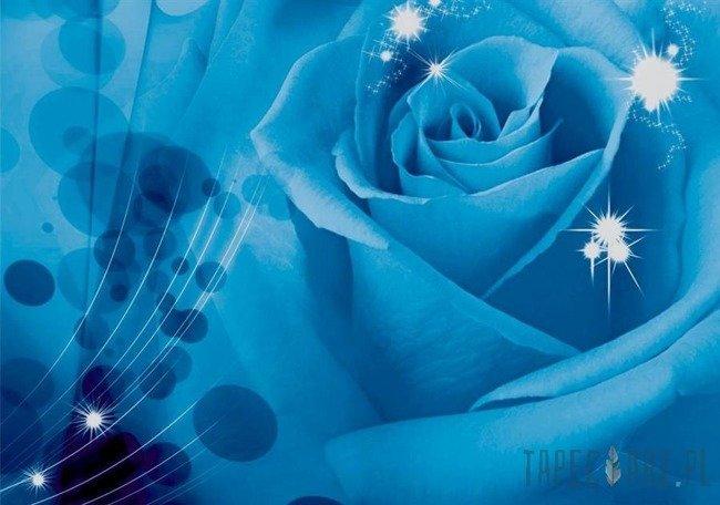 Fototapeta Niebieska róża z odbłyskami 581