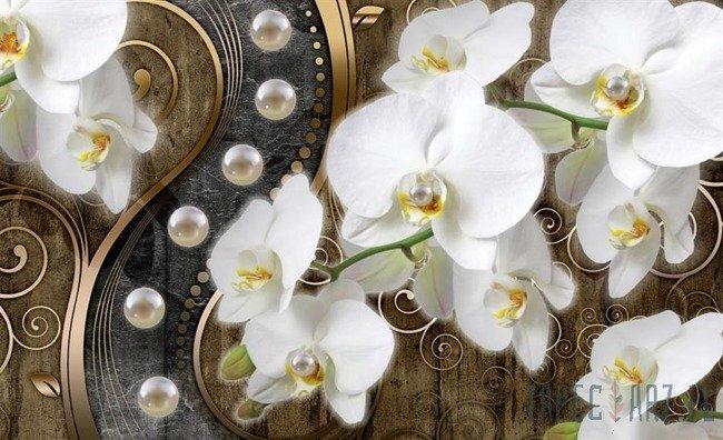 Fototapeta Orchidea 2974
