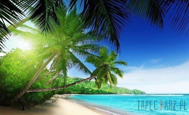 Fototapeta Palmy na plaży 736