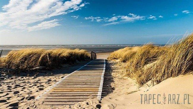 Fototapeta Plaża w słoneczny dzień 1021