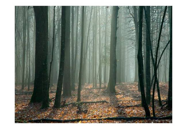 Fototapeta - Witches' forest