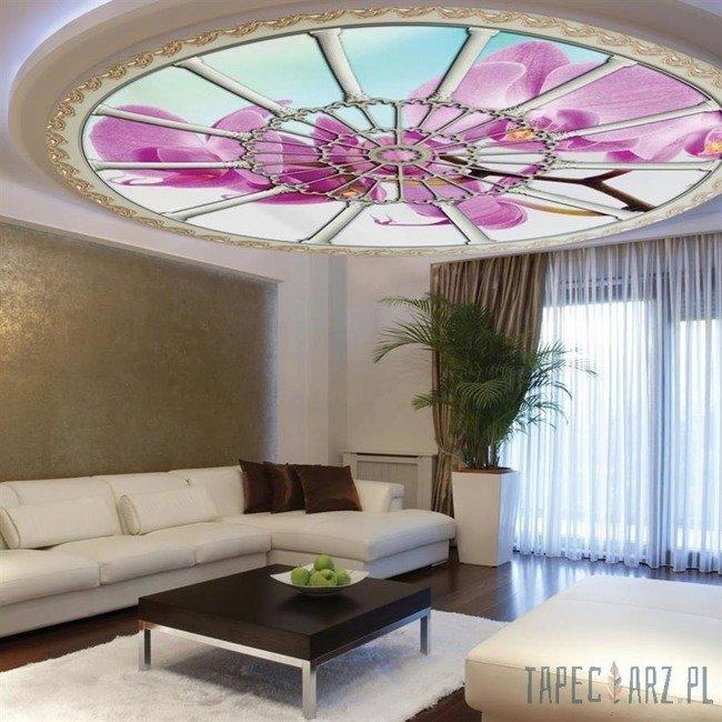 Fototapeta na flizelinie Orchidea - Rozeta 909