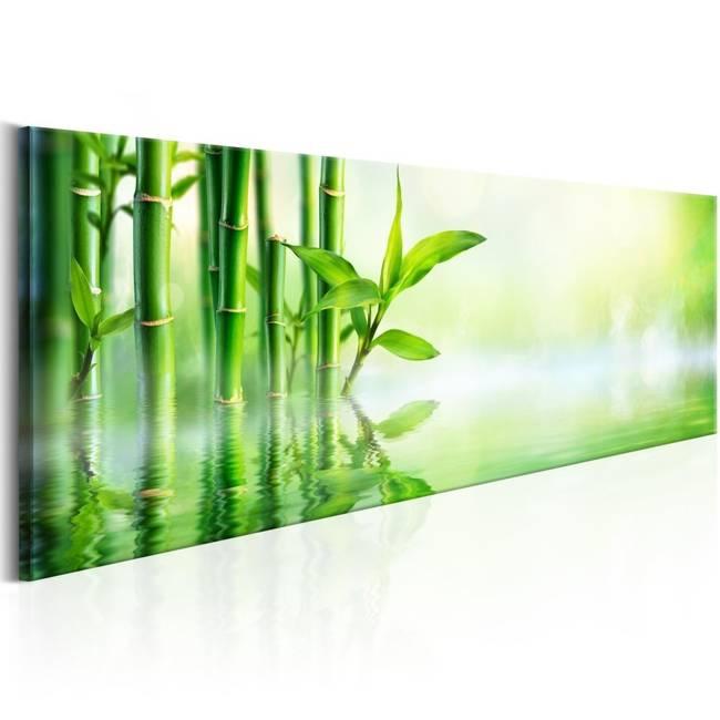 Obraz - Zielony bambus