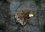 Fototapeta Jaguar zza cementowej ściany 2771
