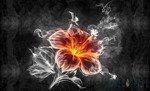 Fototapeta Tajemniczy kwiat 1107