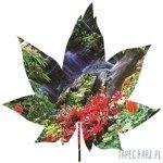 Fototapeta w kształcie liścia - Rajski wodospad 906